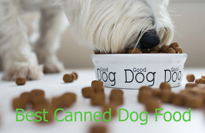 best-canned-dog-food