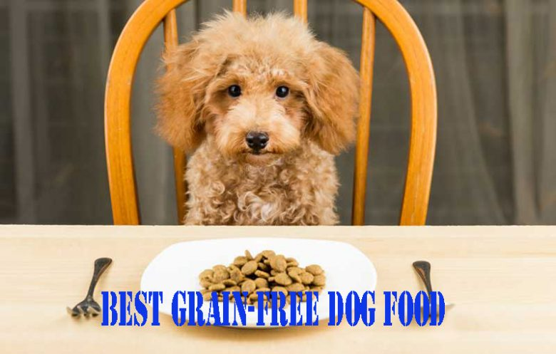 best-grain-free-dog-food