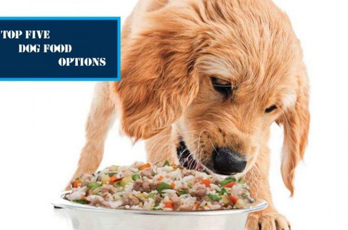 5 Best Dog Food Options