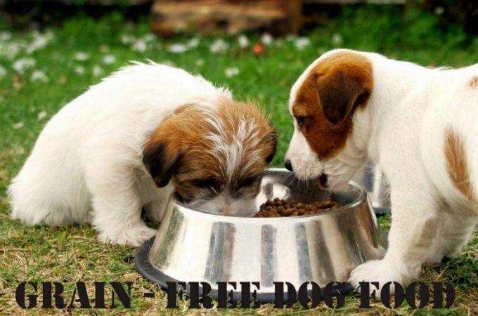 Best Grain Free Dog Food Of 2021
