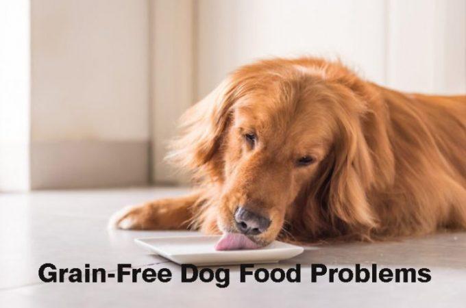 Grain-free-dog-food-problems