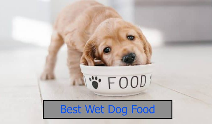 Best-wet-dog-food