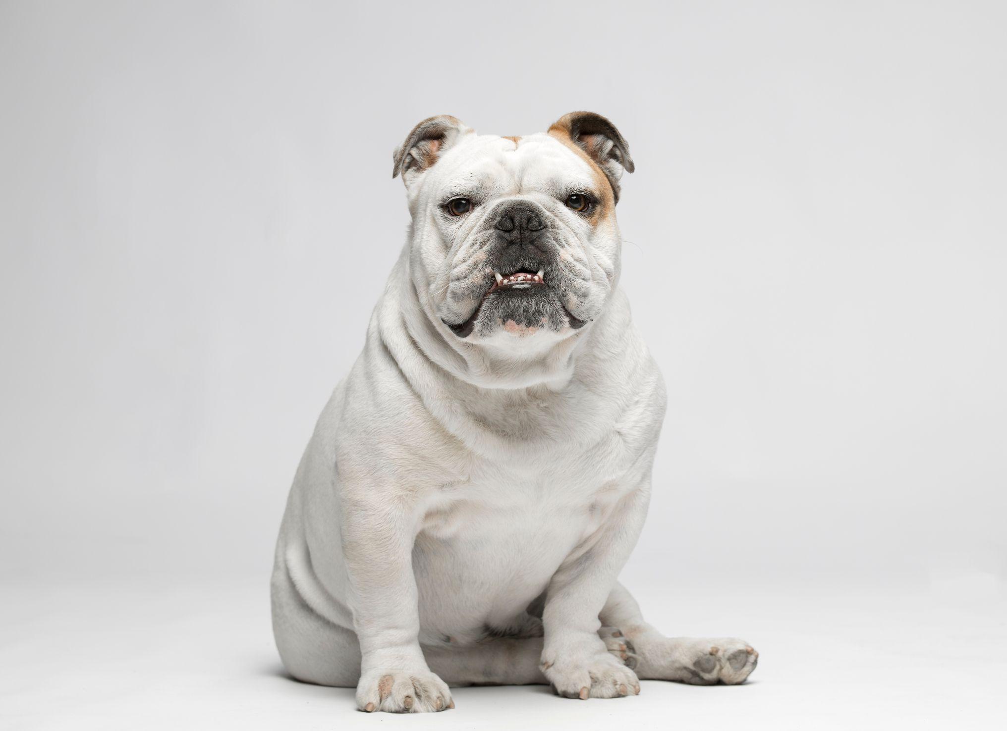 low-energy-dog-breeds