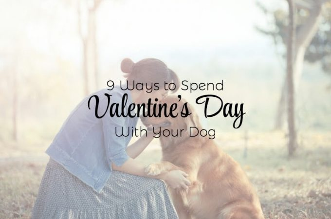 Valentines day with pets